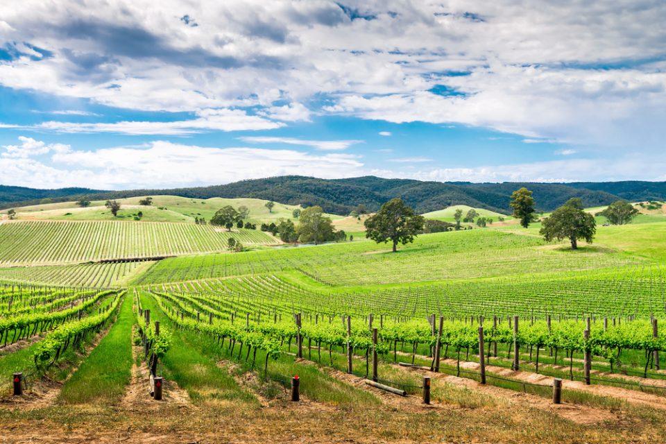 Australia: Becas Para Doctorado en Agricultura Universidad de Tasmania y CSIRO Agricultura y Alimentación
